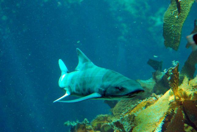 aquarium_isabel