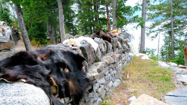 Fourrures exposées Grand Teton National Park