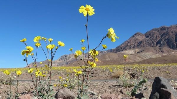 Printemps Death Valley