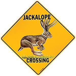 Jackalope crossing