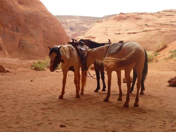 Chevaux Mustang Monument Valley