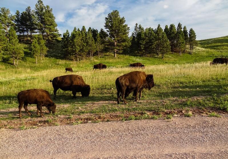Custer State Park Dakota du Sud