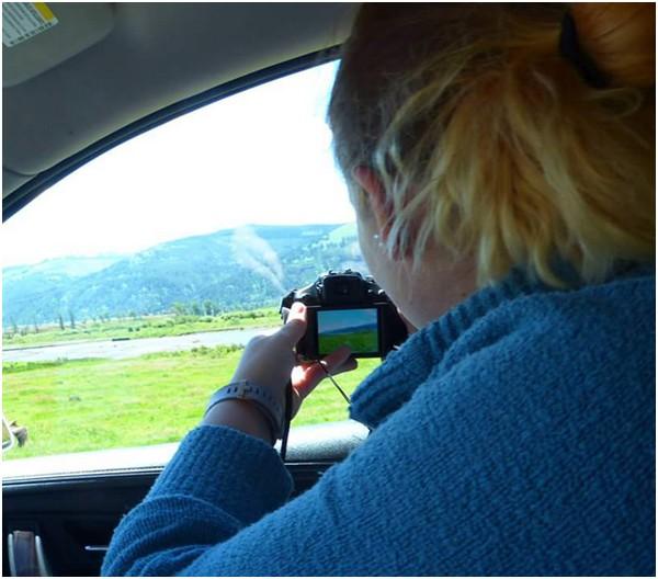 A la découverte de la faune sauvage de Yellowstone