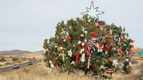 Scrubby, le genévrier de Noël de l'Interstate 17