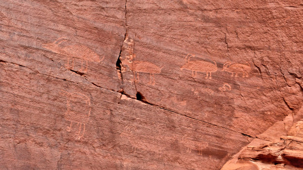 Pétroglyphes de bighorn sheeps, Backcountry Tour Monument Valley