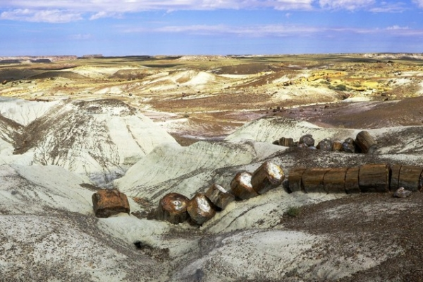Petrified Forest Painted Desert Arizona Ouest USA