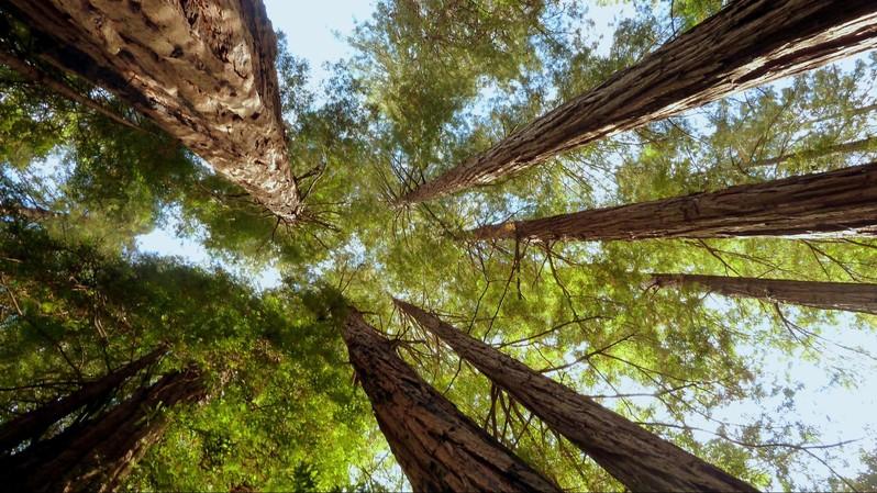 Muir Woods Californie USA