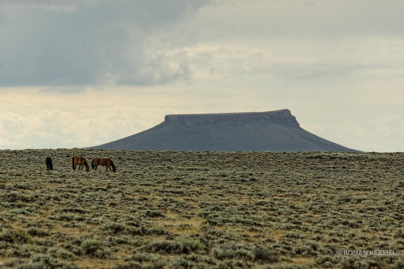 Pilot Butte Wild Horse Scenic Tour Wyoming USA