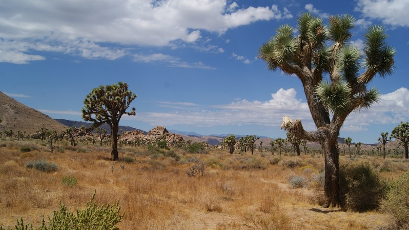 Joshua Tree National Park Californie USA