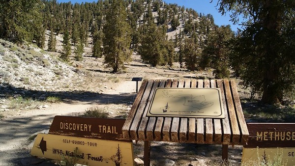 Discovery Trail Ancient Bristlecone Pine Forest