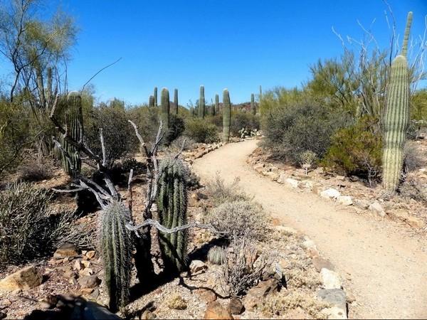 Desert Loop Trail Sonora Desert Museum