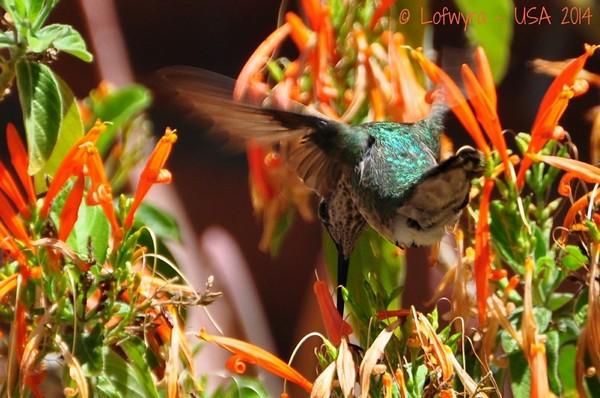 Hummingbird Inviary Sonora Desert Museum