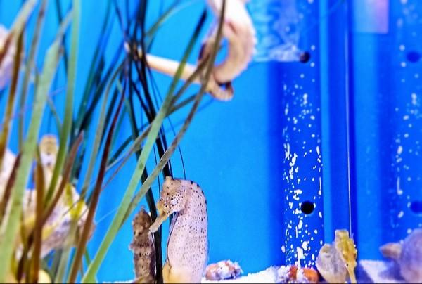 Warden Aquarium Sonora Desert Museum
