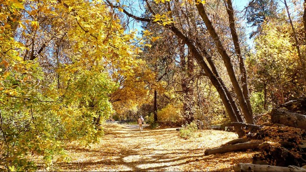 Nature Trail Bandelier National Monument