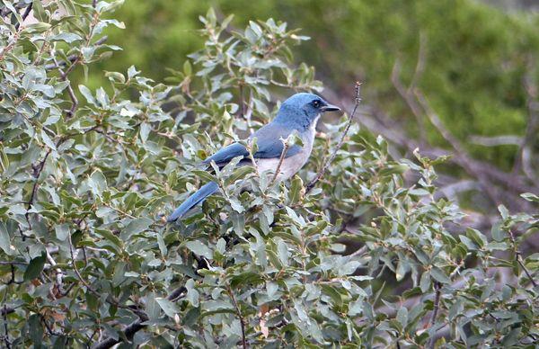 Gaie Bleu Big Bend NP