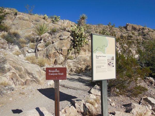 Départ du sentier Boquillas Canyon Trail