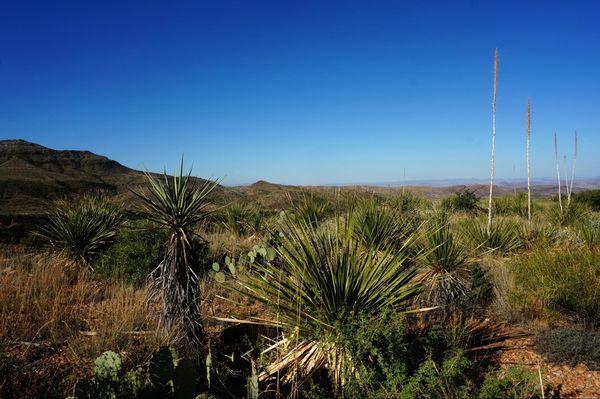 Cactus Cattail Falls Trail Big Bend