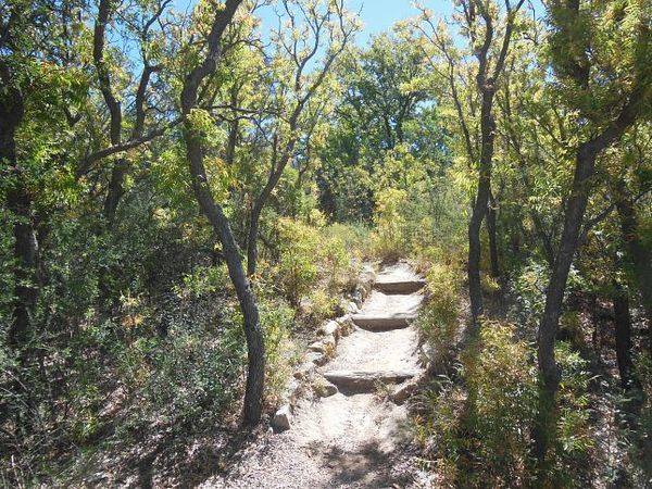 Arbres fruitiers Sam Nail Ranch Big Bend
