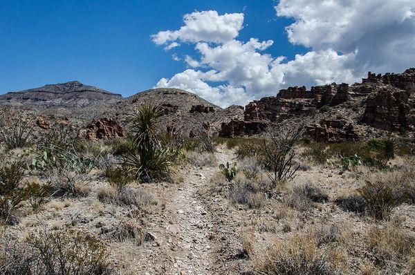 Blue Creek Canyon Trail Big Bend