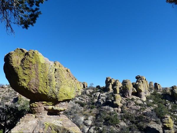 Tuf rhyolitique recouvert de lichen