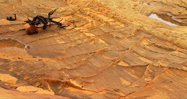 Détail roche Cottonwood Cove Coyote Buttes South Arizona