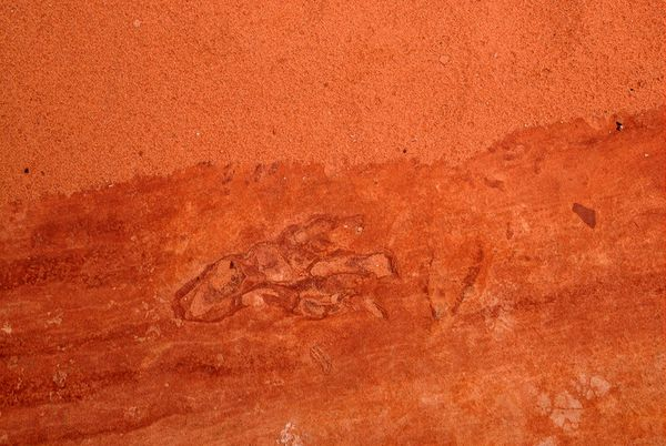 Empreinte dinosaure Coyote Buttes South Arizona