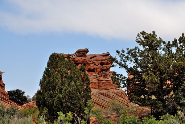 Pig Rock Coyote Buttes South Arizona