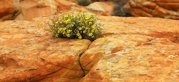 Fleurs Coyote butte South Arizona