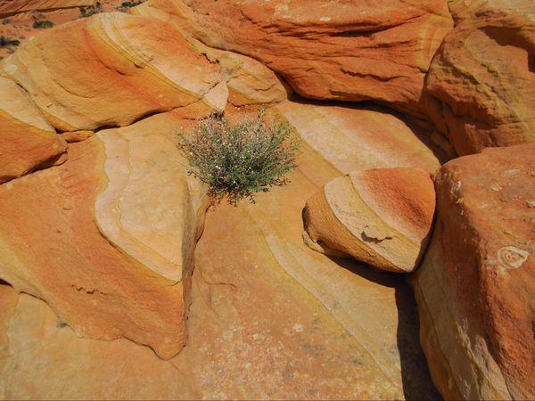 Étonnantes couleurs à Cottonwood Cove Coyote Buttes South Arizona