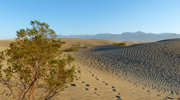 Mesquite Sand Dunes Death Valley National Park Californie