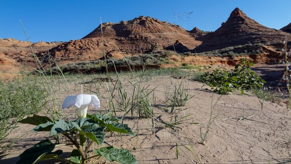 Wash fleuri sentier accès Edmaier's Secret Arizona