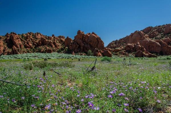 Environnement printanier Edmaier's Secret Arizona