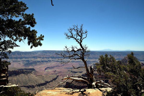 Vue depuis Walhalla Overlook rive Nord Grand Canyon Arizona