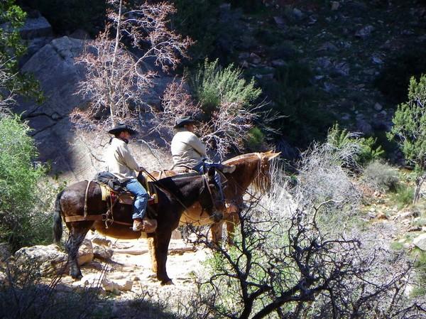 Randonnée à dos de mules Grand Canyon rive nord Arizona