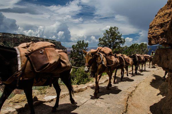 Randonnée à dos de mules Grand Canyon Arizona