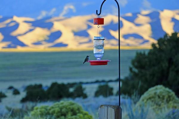 Depuis le patio du Great Sand Dunes Lodge au sunrise, colibri en mode ravitaillement sur fond de carte postale