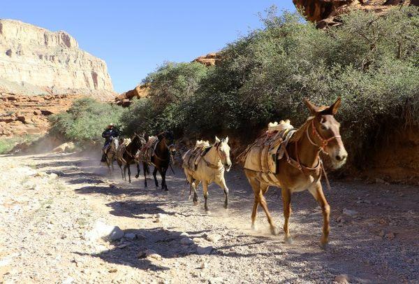 Randonnée à dos de mule Havasupai