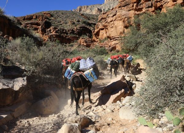 Randonnée à dos de mules Havasupai