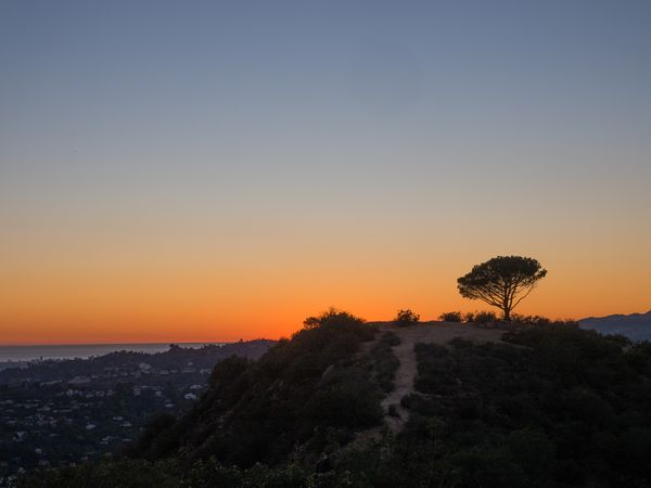 Tree of Life Los Angeles