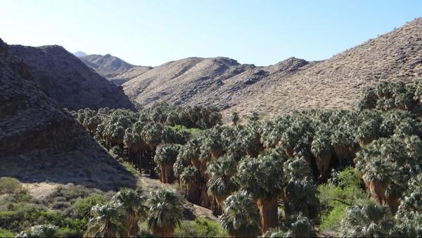 Palm Canyon - vue depuis le parking
