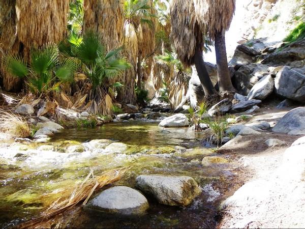 Andreas Canyon Trail