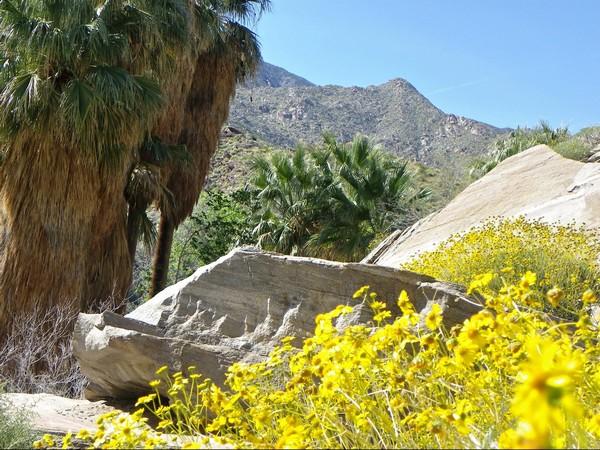 Les Indian Canyons au printemps