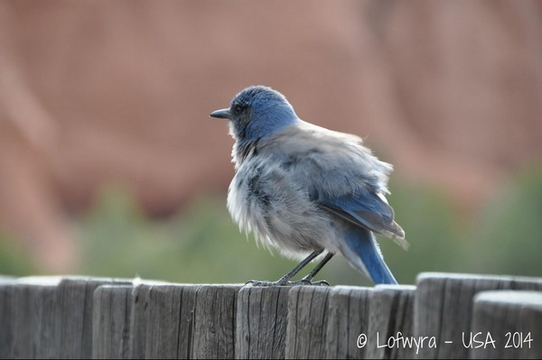Oiseau Kodachrome Basin State Park