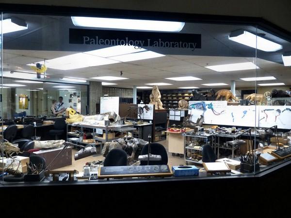 Laboratoire de paléontologie George C. Page Museum Los Angeles