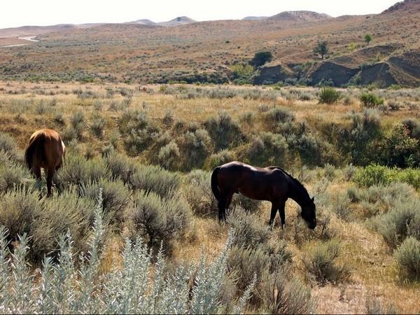Battlefield Road Little Bighorn