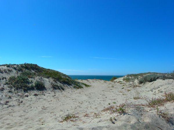 Moss Landing State Beach Californie