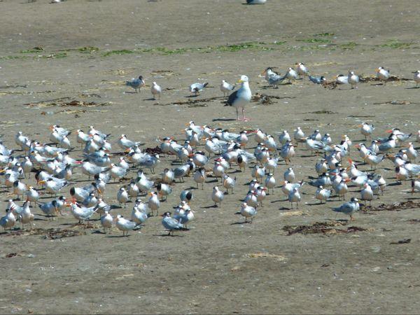 Moss Landing Wildlife Area Californie