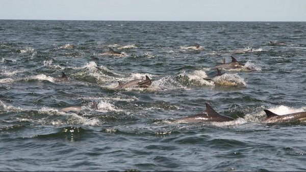 Croisière observation des baleines Moss Landing Californie