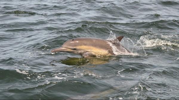 Croisière observation dauphins Moss Landing Californie