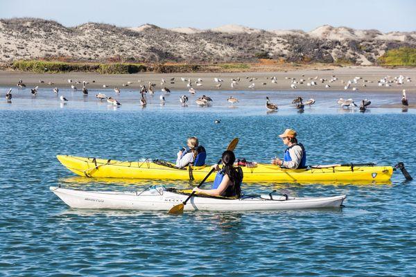 Balade en Kayak Moss Landing Californie